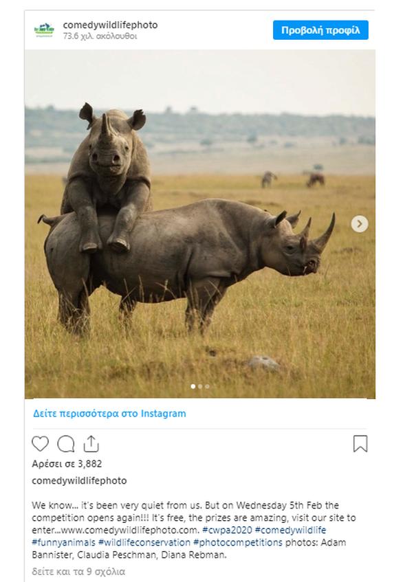 Βραβεία Κωμικής Φωτογραφίας Άγριας Ζωής: Oι πιο αστείες στιγμές της φύσης
