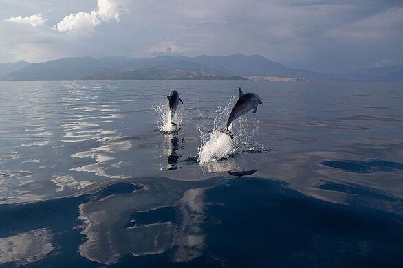 """Νηρέας: """"Ημέρα Περιβάλλοντος: να σεβαστούμε τη ζωή σε στεριά και θάλασσα"""""""