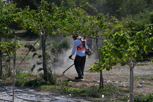 Πάτρα - Ξεκίνησαν εργασίες καθαρισμού και διαμόρφωσης στο Πλατανόδασος (φωτο)