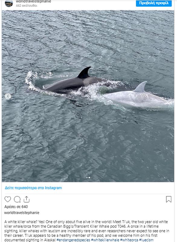 Λευκή φάλαινα-δολοφόνος εντοπίστηκε στην Αλάσκα (φωτο)