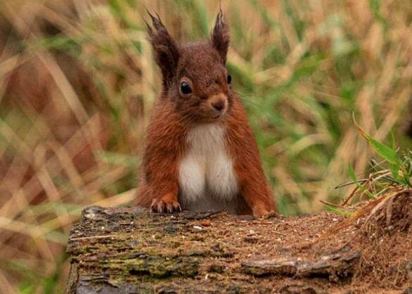 Σκίουρος έγινε «viral» επειδή έχει ασυνήθιστα μεγάλο στήθος