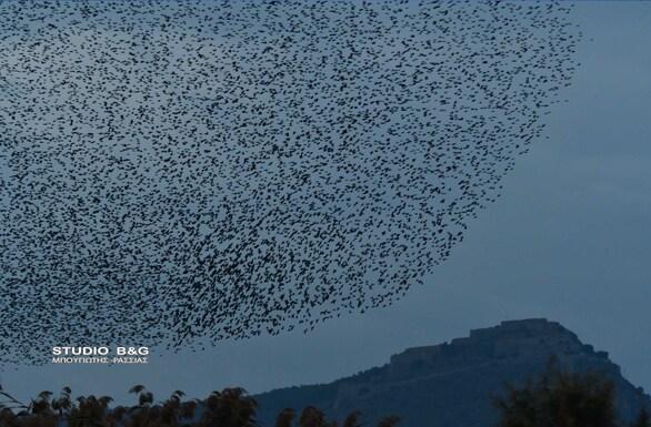 Χιλιάδες ψαρόνια στον ουρανό του Ναυπλίου (pics+video)