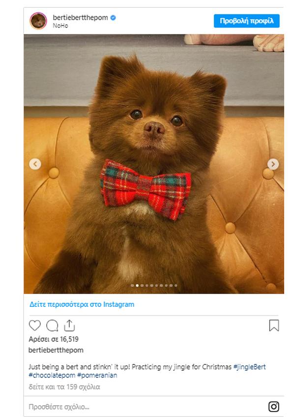 Το σκυλάκι που μοιάζει με αρκουδάκι… (φωτο)