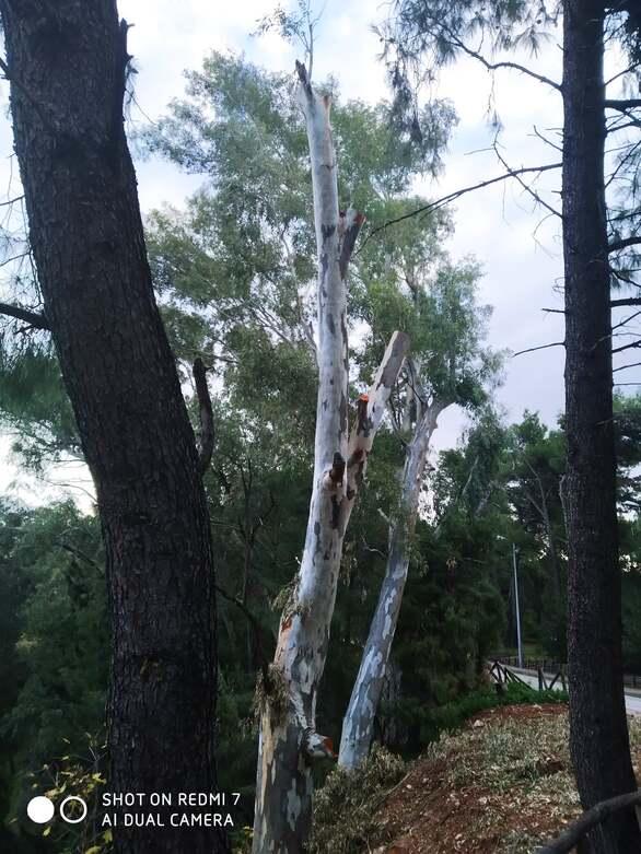 Πάτρα: Εικόνες καταστροφής στο μονοπάτι που ένωνε την Καρόλου με το Δασύλλιο