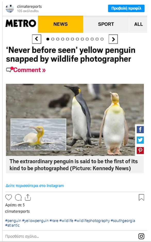 Ερευνητής φωτογράφισε κίτρινο πιγκουίνο για πρώτη φορά (φωτο)