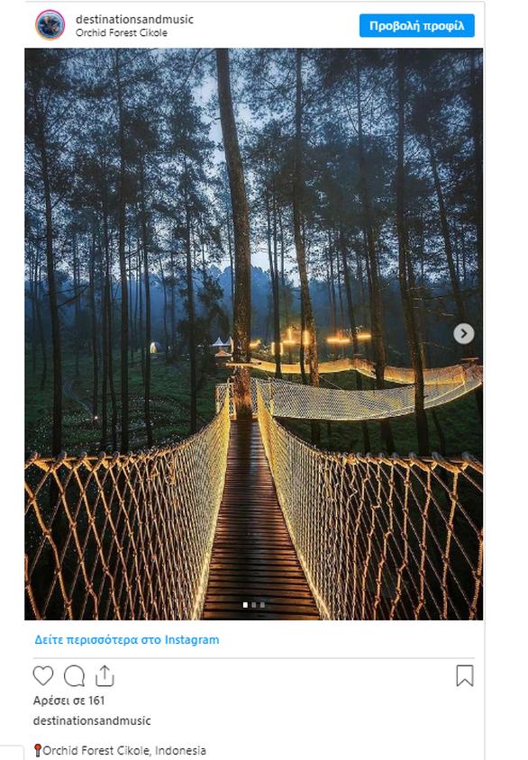 Ινδονησία: Αυτό το δάσος έχει μια μαγική γέφυρα ανάμεσα στα δέντρα (pics+video)