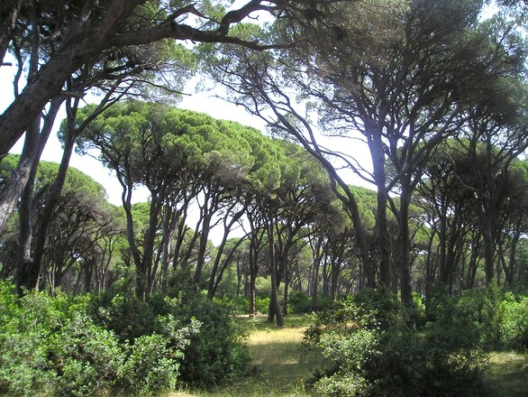 Αχαΐα: Δράσεις προστασίας και διατήρησης της βιοποικιλότητας στο Εθνικό Πάρκο Κοτυχίου - Στροφυλιάς