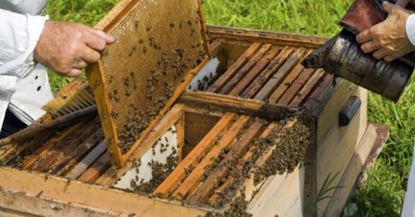 """""""Άγριες μέλισσες"""" κράτος και πανδημία για τους μελισσοκόμους της Αχαΐας!"""