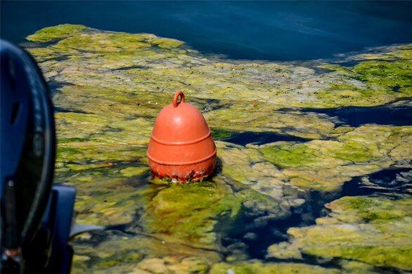 Πρέβεζα: «Πράσινη παλίρροια» από φύκι κατέκλυσε το λιμάνι (φωτο)