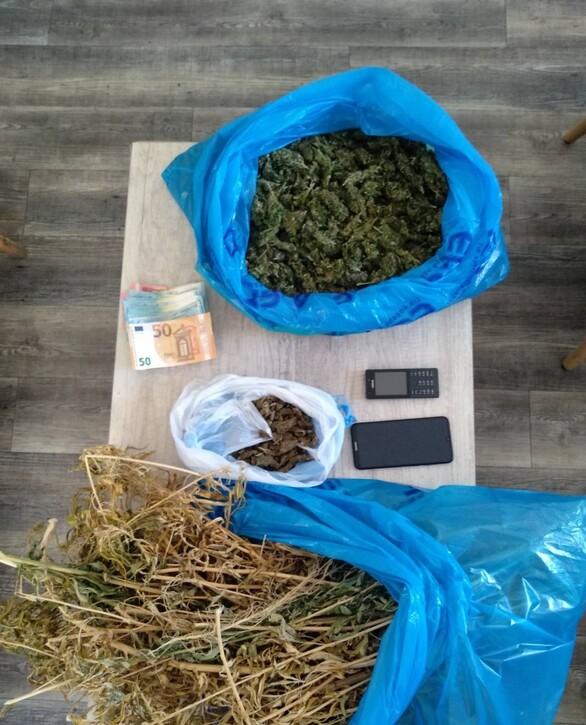 Πάτρα: Εκριζώθηκαν 110 δενδρύλλια κάνναβηςκαι περισσότερο από ένα κιλό της ναρκωτικής ουσίας (φωτο)