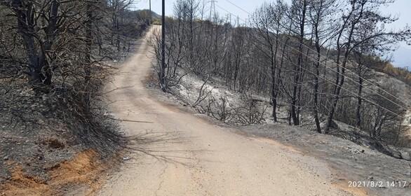 """Απόστολος Κατσιφάρας: """"Ερωτήματα για την καταστροφική πυρκαγιά της Αιγιάλειας"""""""