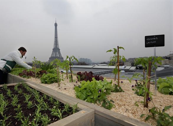 """Ταράτσες """"βουτηγμένες"""" στο πράσινο - Η νέα μόδα που προστατεύει το περιβάλλον! (pics)"""
