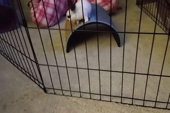 Δείτε το πιο σκανταλιάρικο κουνέλι που αν μυρίσει φαγητό μπορεί... να περάσει από παντού! (video)