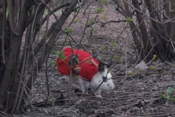 Η επική περιπέτεια ενός κουνελιού (video)