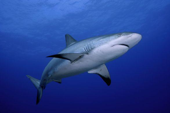 Αχαΐα: Πιάστηκε καρχαρίας στα δίχτυα ψαράδων στις Αλυκές (pics)