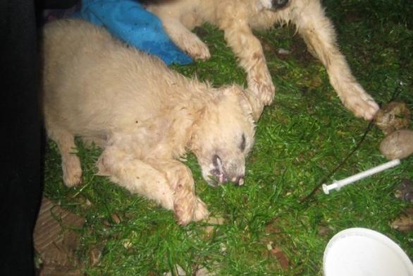 Aγρίνιο: Δηλητηρίασαν κουτάβια στην ταΐστρα του Δήμου (pics)