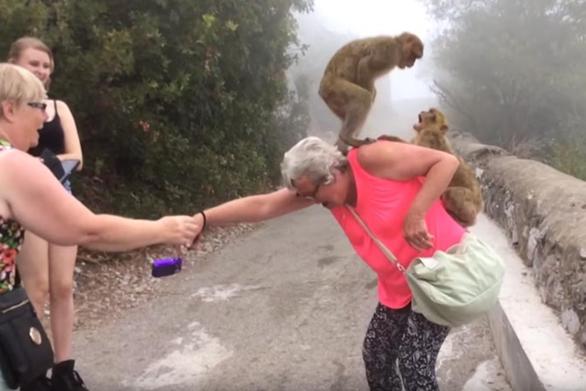 10 μαϊμούδες που δεν θα ήθελες να συναντήσεις (video)