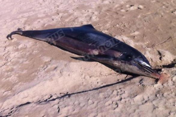 Δυτική Ελλάδα: Ένα ακόμα νεκρό δελφίνι στα Λέτρινα