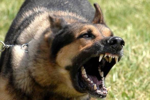 Πάτρα: Σκύλος έστειλε στο νοσοκομείο 29χρονη