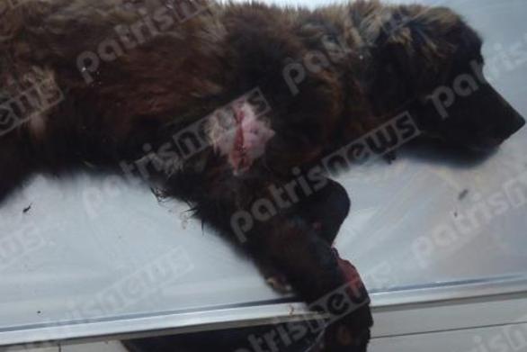 Δυτική Ελλάδα: Έσερνε με τρακτέρ σκύλο στο δρόμο!