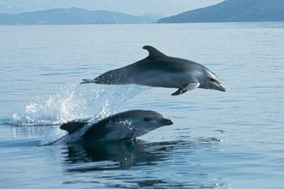 Τα... παιδιά της θάλασσας, τα δελφίνια, έπαιξαν με τα νερά, στην παραλία του Αιγίου (video)