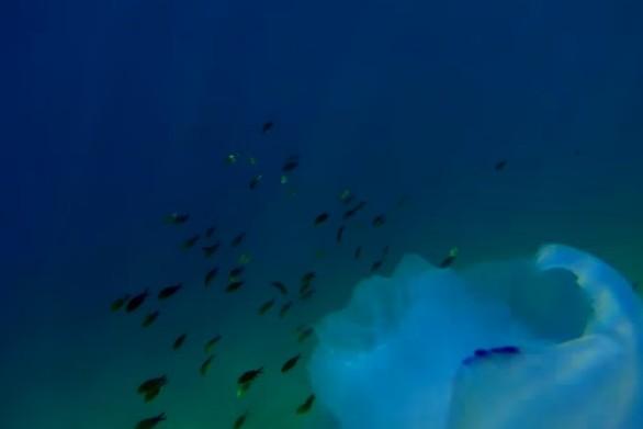 Περιπλάνηση στον βυθό της Παναγοπούλας (video)