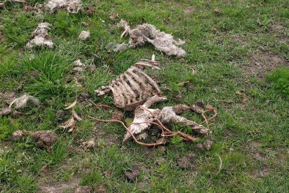 Πάτρα: Συγκέντρωση σήμερα στα Δικαστήρια για την υπόθεση κακοποίησης ζώων σε φάρμα της δυτικής Αχαΐας