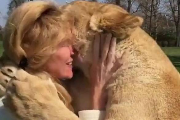 Η απίστευτη αντίδραση λιονταριών όταν βλέπουν τη γυναίκα που τα μεγάλωσε (video)