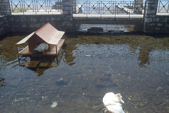 Η μικροσκοπική λίμνη της Ναυπάκτου και... η γλυκιά ιδιαιτερότητα της! (pics)