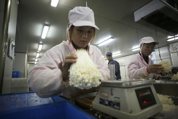 Το περίεργο μανιτάρι της Κίνας που κάνει θραύση σε όλον τον κόσμο (pics)