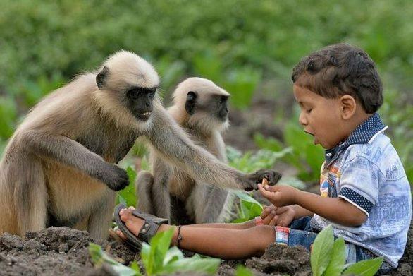Δίχρονο αγοράκι ανέπτυξε μια παράξενη φιλία με μαϊμούδες (pic)