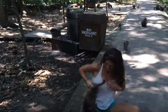 Η άτακτη μαϊμού και ο... ζηλιάρης σύζυγος (video)