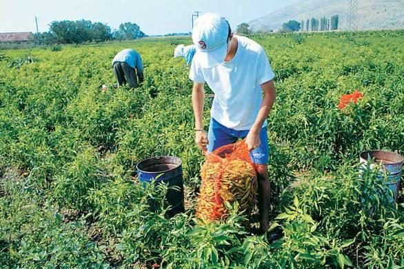 Πάτρα - Σήμερα η ενημερωτική εκδήλωση για τα Σχέδια Βελτίωσης του Προγράμματος Αγροτικής Ανάπτυξης