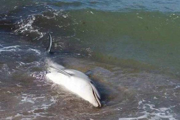 Εντοπίστηκε νεκρό δελφίνι στην Μονεμβασιά