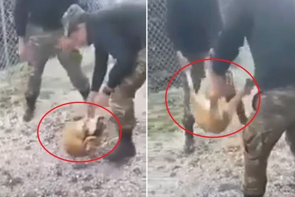Βάρβαρη κακοποίηση σκύλου από φαντάρους σε στρατιωτικό χώρο (video)