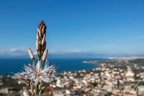 Η ομορφιά της φύσης στα Βραχναίικα! (video)