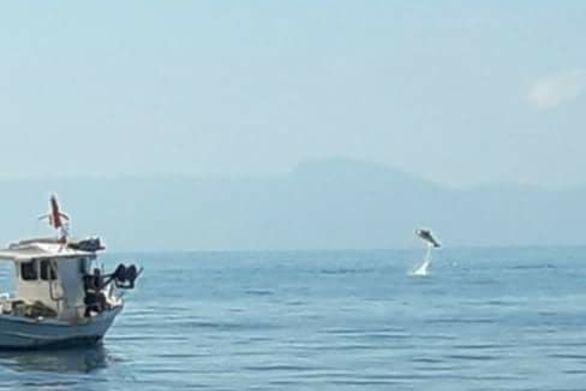 """Άνοιξη και τα δελφίνια """"χορεύουν"""" στα ανοιχτά του Πατραϊκού"""