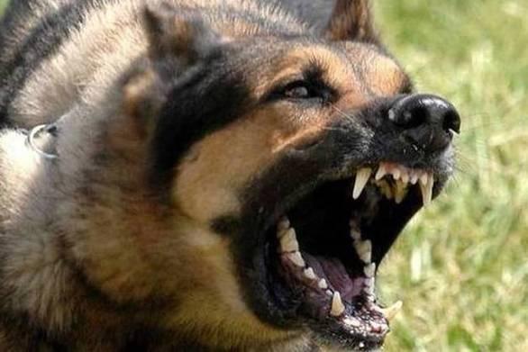 Αίγιο: Σκύλος δάγκωσε πεζό και τραυμάτισε θανάσιμα το κατοικίδιό του