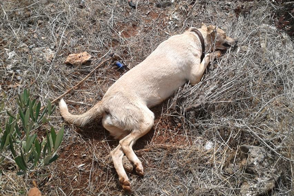 Ηλεία: Δηλητηρίασαν ζώα συντροφιάς στην Αμαλιάδα