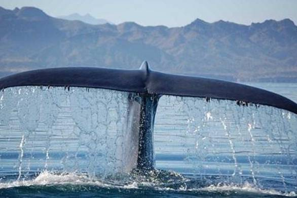 "Guardian: ""Πώς τα κρουαζιερόπλοια απειλούν με εξαφάνιση τις τελευταίες φάλαινες στην Ελλάδα"""