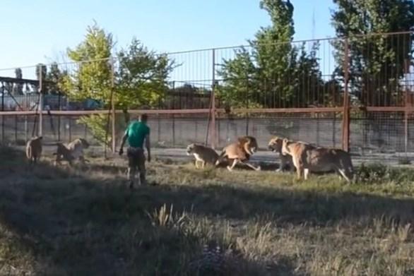 Θηριοδαμαστής σταμάτησε τσακωμό ανάμεσα σε λιοντάρια με μία... παντόφλα (video)