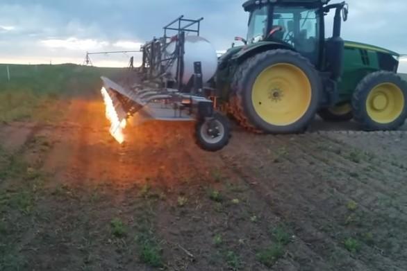 Μια εναλλακτική μέθοδος για να καθαρίσετε το χωράφι από τα ζιζάνια (video)