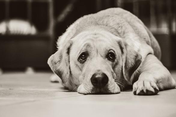 Τι συμβαίνει όταν ο σκύλος σου έχει συχνά λυπημένο βλέμμα