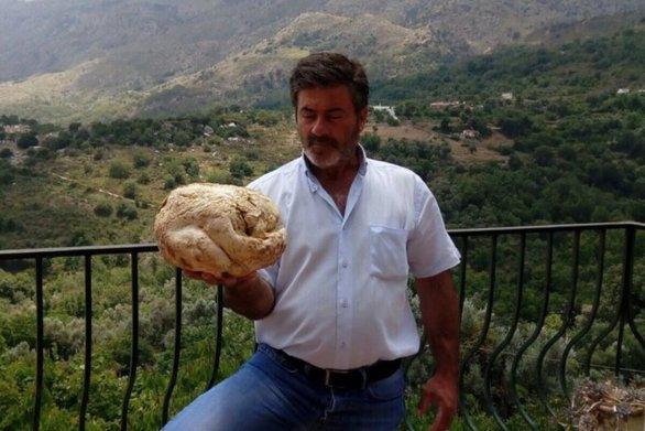 Βρέθηκε τεράστιο μανιτάρι στο Ρέθυμνο (φωτο)