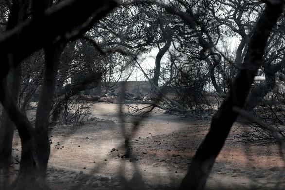 """Συγκλονίζει αστυνομικός: """"Κάποιοι δεν πέθαναν από τις φλόγες, έλιωσαν"""""""
