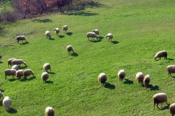 Δημοσιογράφος του ΑΝΤ1 έγινε κτηνοτρόφος στην Κρήτη (video)