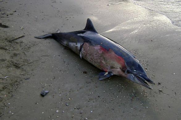 Βρέθηκε νεκρό δελφίνι στη Σκύρο