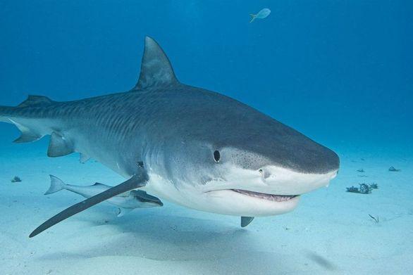 Καρχαρίας επιτέθηκε σε λουόμενο στη Μασαχουσέτη