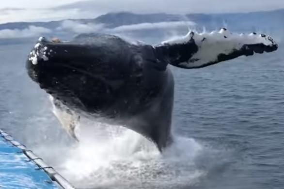 Πήγαν να δουν από κοντά φάλαινα μα έγιναν μούσκεμα (video)