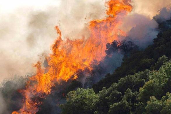 Μεγάλη φωτιά ξέσπασε σε δάσος στην Αρκαδία
